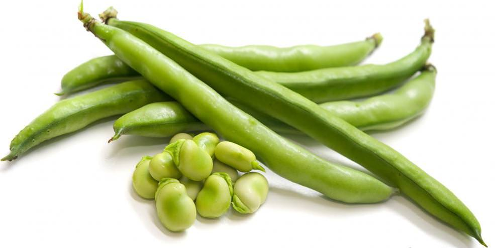 Стручковая фасоль очень богата основными витаминами и необходимыми для жизнедеятельности минералами